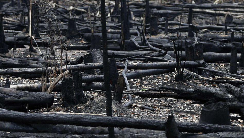 Verbranntes Areal im Amazonas-Gebiet: Krieg, um den Wald zu retten?