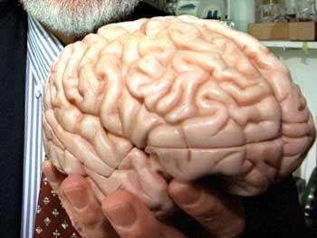 Gehirn-Modell: Hält jeder Wissenschaftler den Schlüssel zur Genialität in den eigenen Händen?