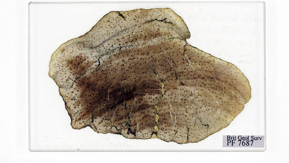 Forschungsgeschichte: Darwin-Fossilien aus der Schublade