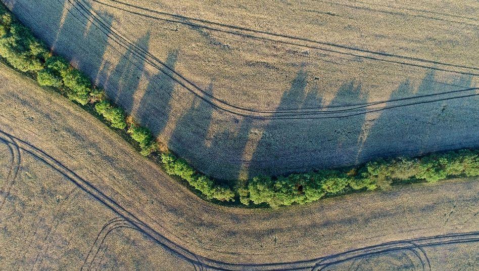 Bäume und Büsche zwischen Getreidefeldern als Rückzugsort für Pflanzen und Tiere (Archivbild)