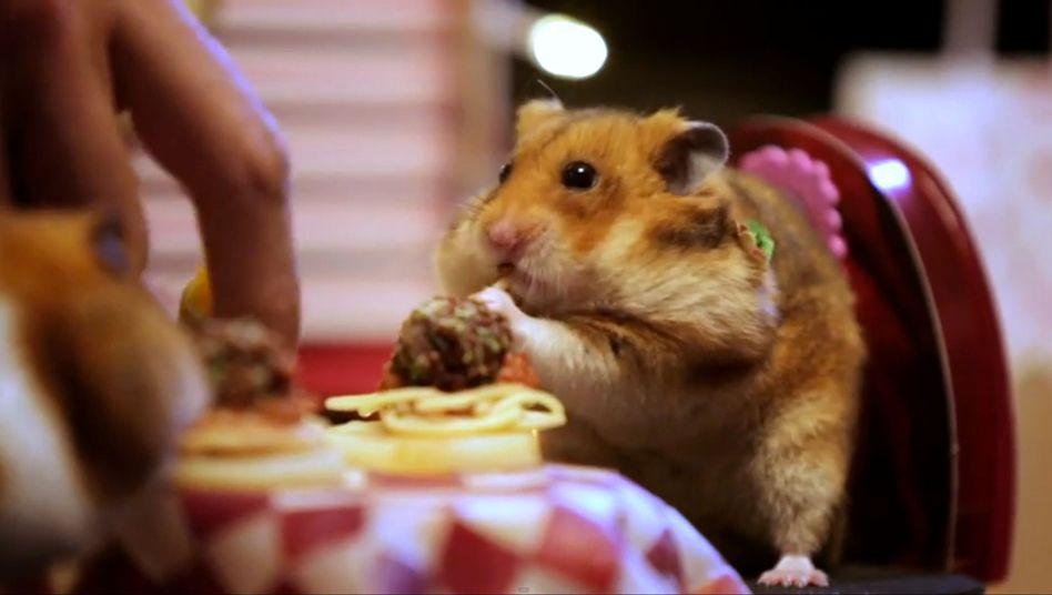 Zum Valentinstag: Kleine Hamster mit großem Hunger