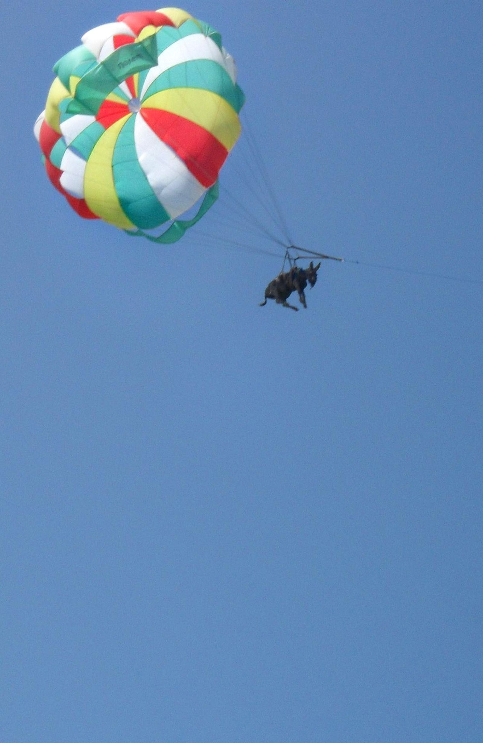 Fliegender Esel / Fallschirm