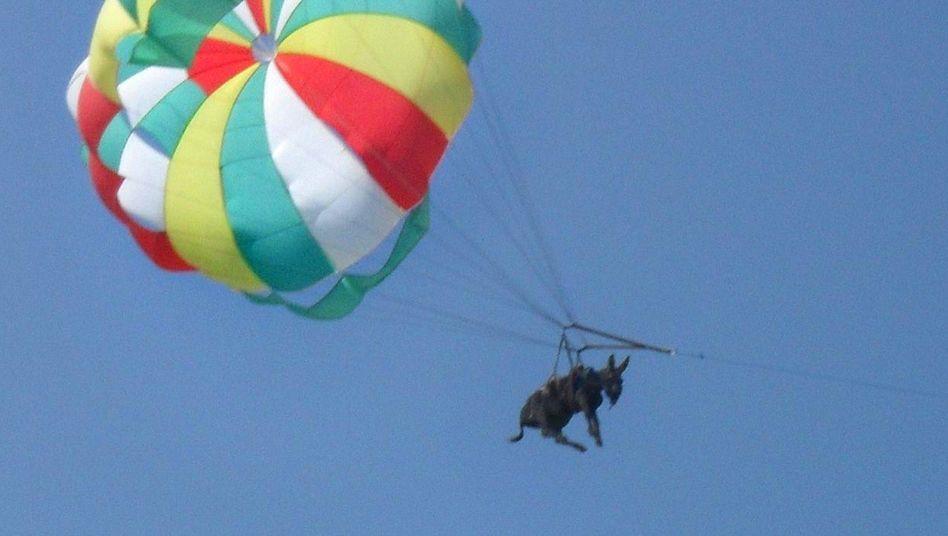 Esel am Fallschirm: Auch schlechte Werbung bringt manchmal viel Aufmerksamkeit