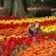 Zerstört nicht unsere Tulpen!