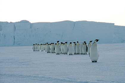 Pinguine: Unter Druck in der Antarktis
