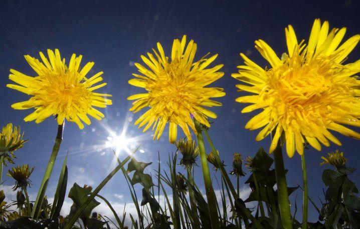Hier kommt die Sonne: Die Haut kann wieder Vitamin D bilden