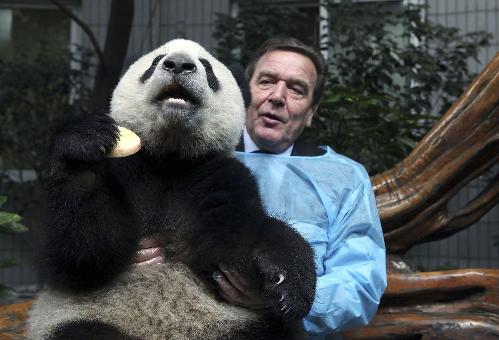 Gerhard Schröder / Panda / Zoo / Chengdu