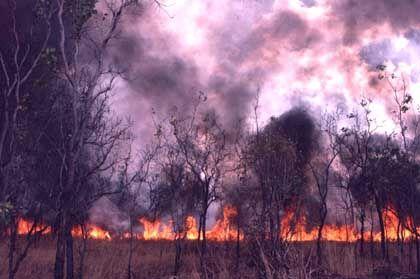 Brandrodung in Australien: Werk des Ökosünders Mensch