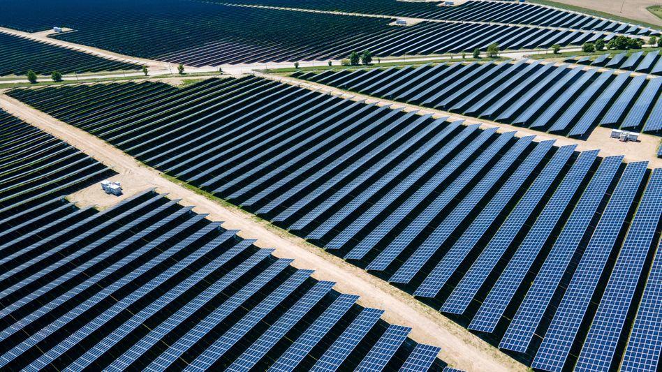 Fotovoltaik-Park in Gaarz, Mecklenburg-Vorpommern: »Werden Solarparks naturschutzgerecht geplant und betrieben, sind sie ein Gewinn für die Biodiversität«
