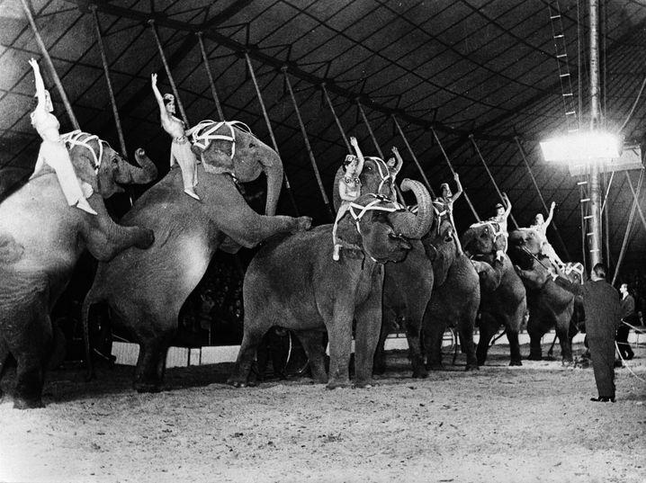 Franz Althoffs Elefantenballett 1956