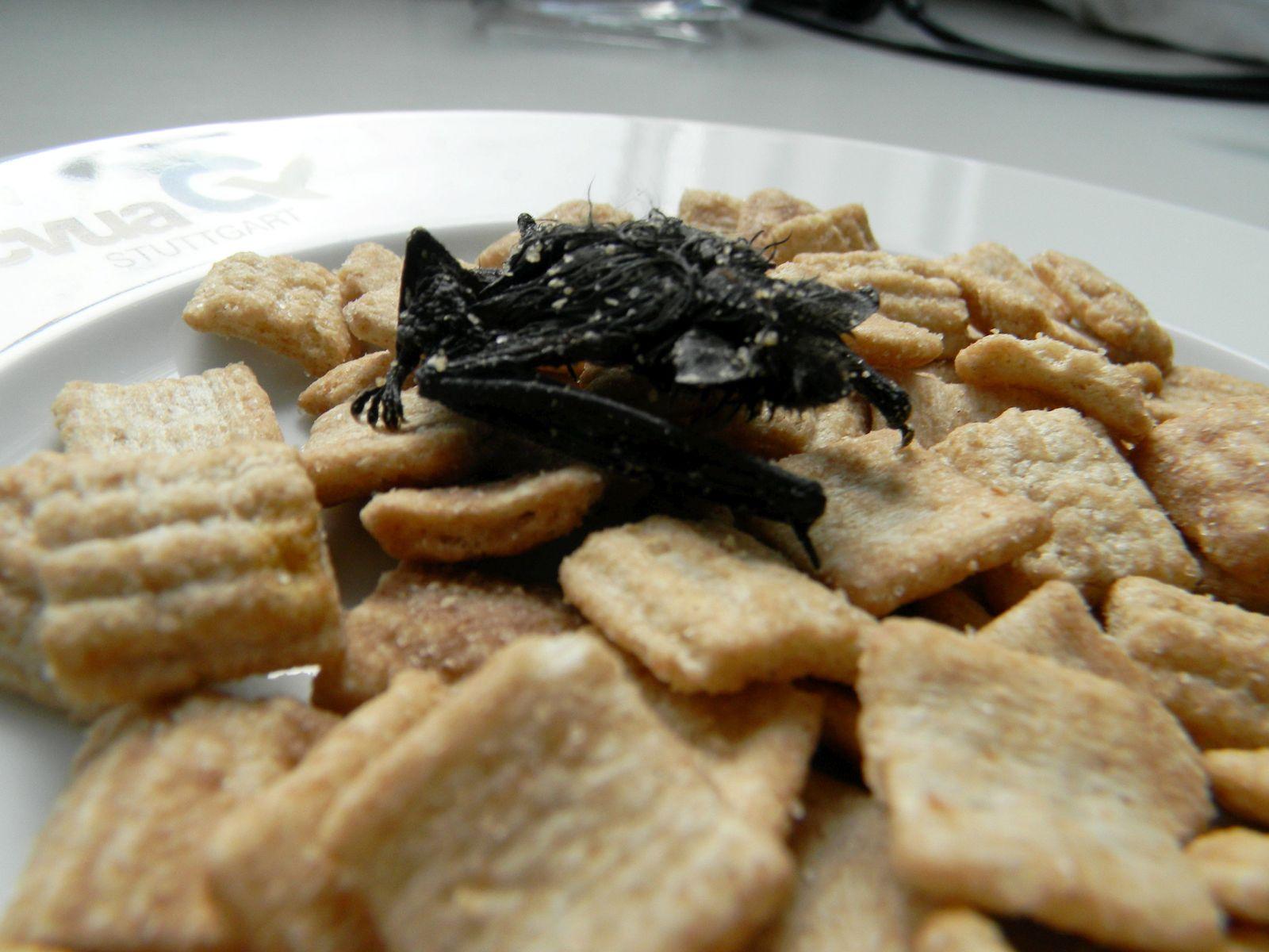 Mumifizierte Fledermaus in Cornflakespackung