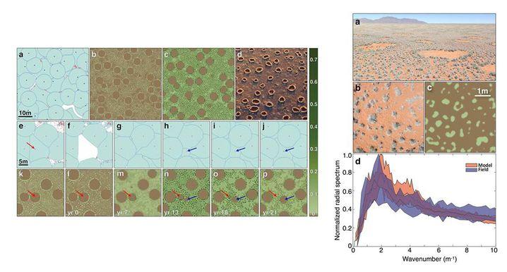 Neue Simulationen von Feenkreisen: Muster nachgebildet