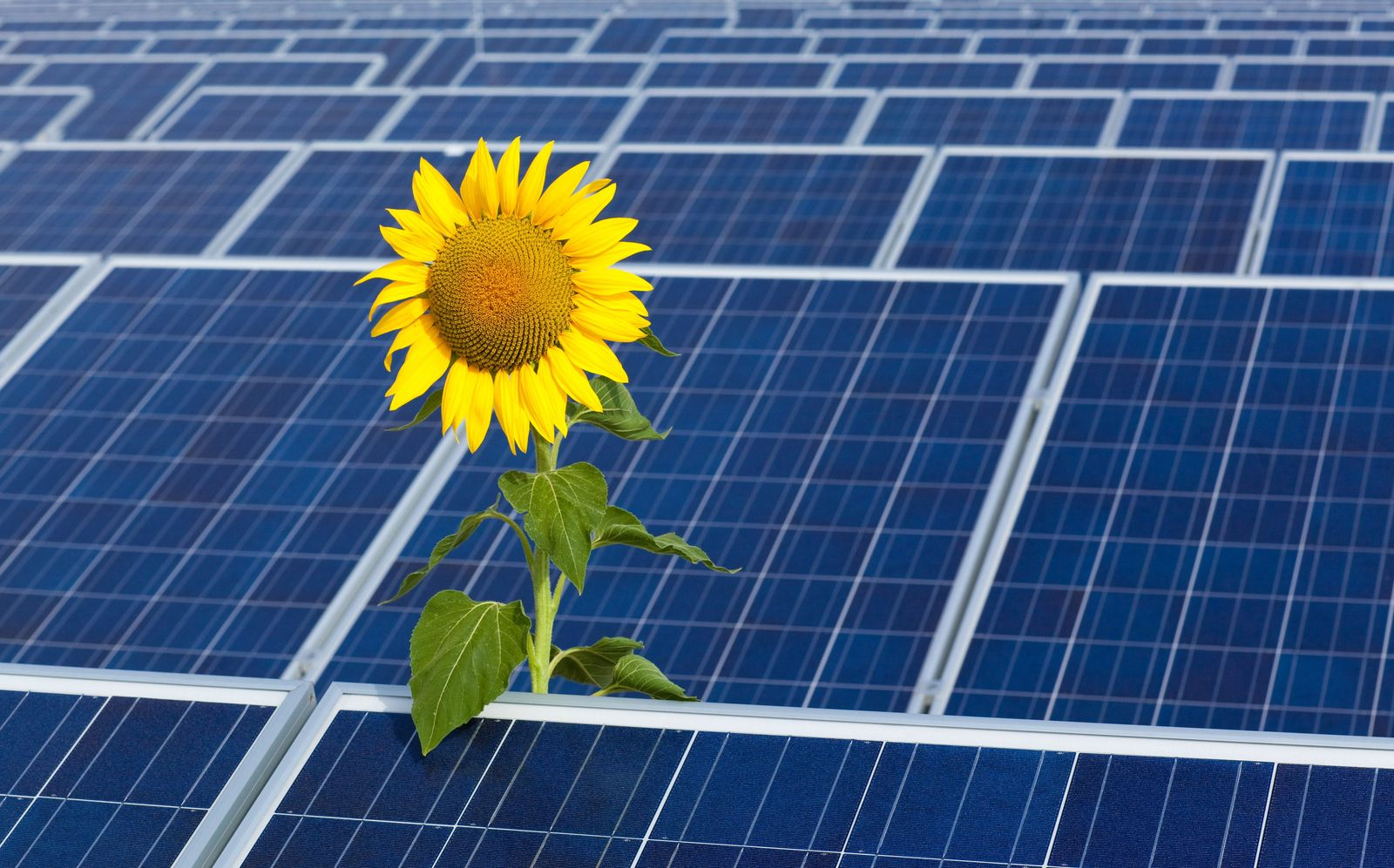 Google / Solarpark / Brandenburg