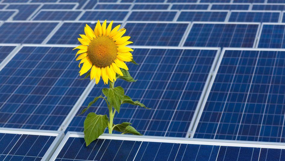 Sonnenblume vor einer Photovoltaik-Anlage in Brandenburg: Ostdeutsche Vorreiter