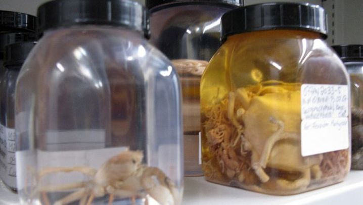 Bioprospektion: Das Eismeer als Apotheke
