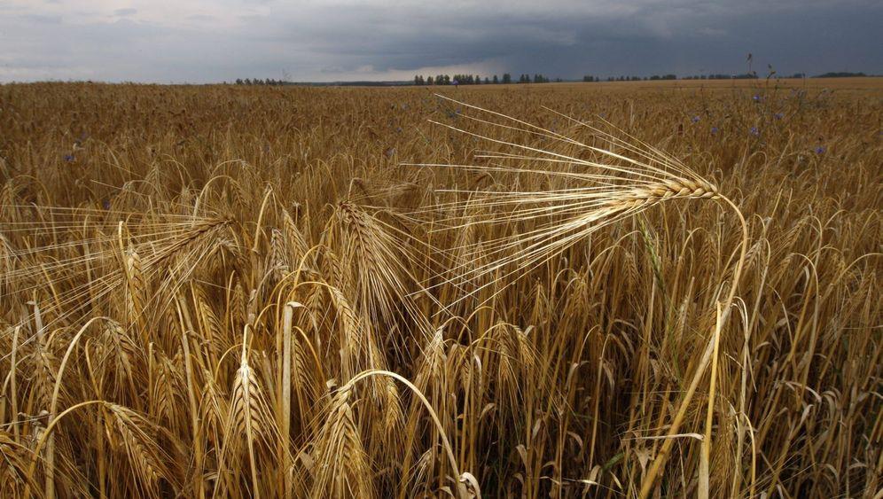 Landwirtschaft: Bauernland in Bonzenhand