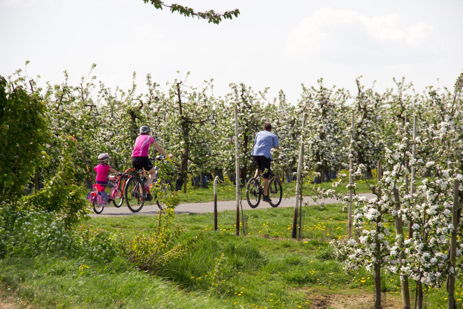 2018 Frühling Meckenheimer Blütentour