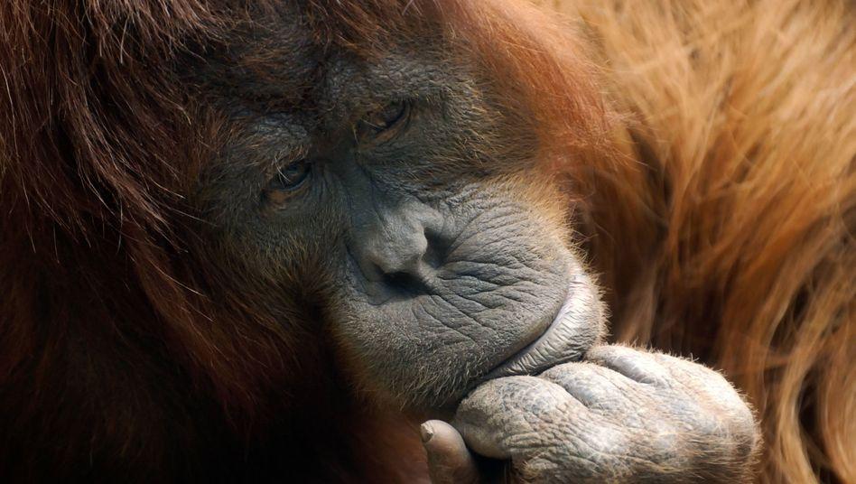 Ein Wort, zwei Bedeutungen: die Affenfaust