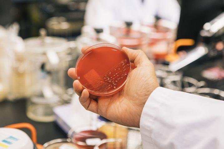 Im Universitätsklinikum Groningen werden Patientenabstriche im hauseigenen Labor kultiviert und analysiert. Das sichert schnelle Ergebnisse. In deutschen Krankenhäusern schickt man Proben oft in andere Städte.
