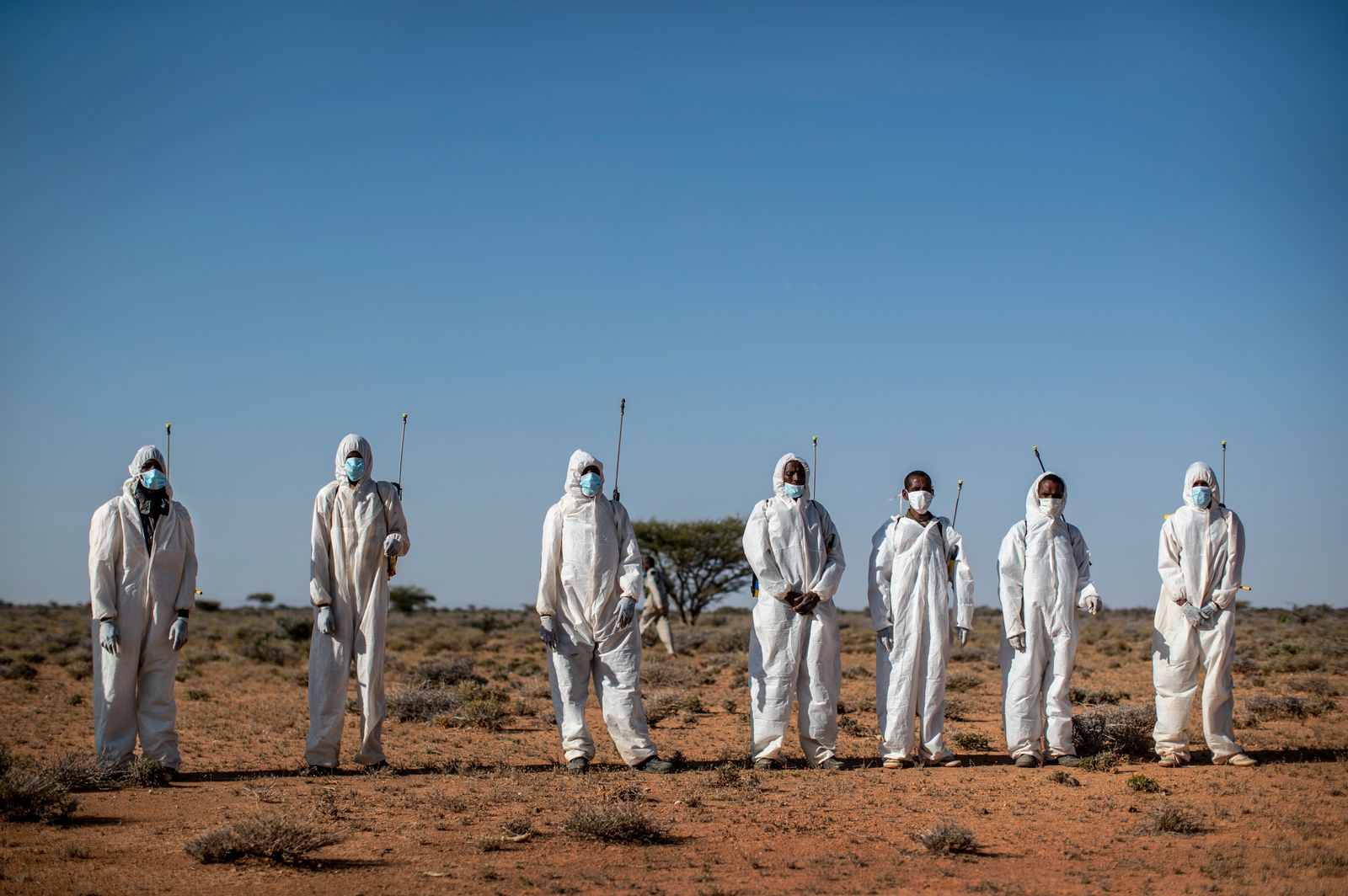 Somalia Africa Locust Outbreak