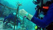 Erste Hilfe für Korallen