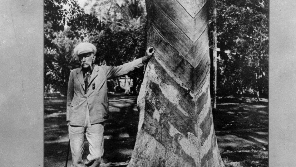Aufnahme circa 1913: Sir Henry Wickham vor einem Gummibaum