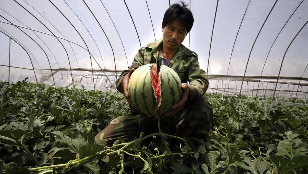Zerplatzte Ernte: Explodierende Melonen