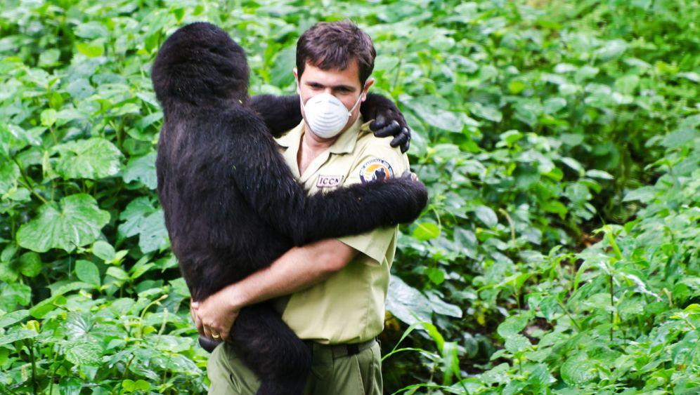Ranger im Kongo: Einsatz für den Berggorilla