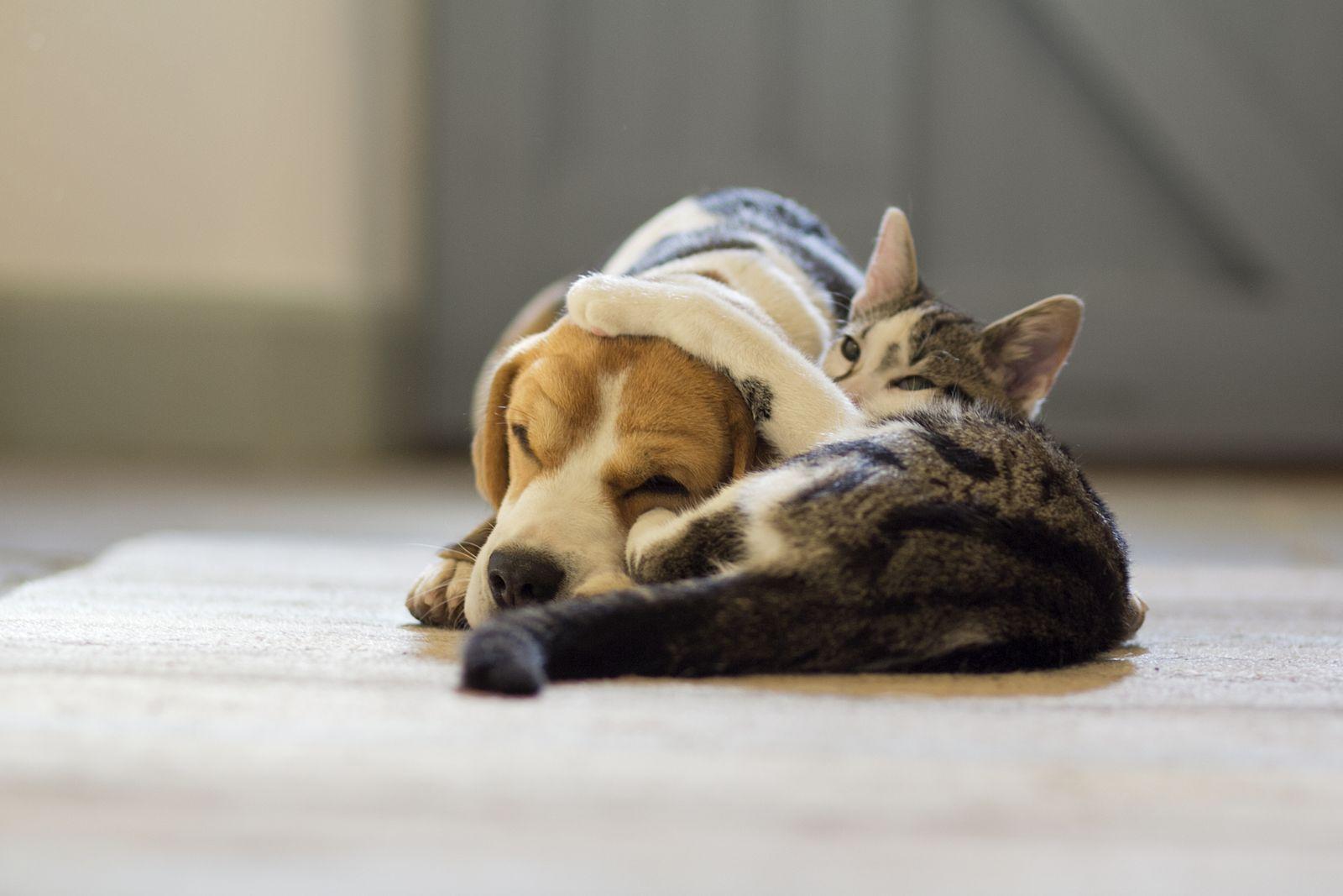 EINMALIGE VERWENDUNG Katze/ Hund