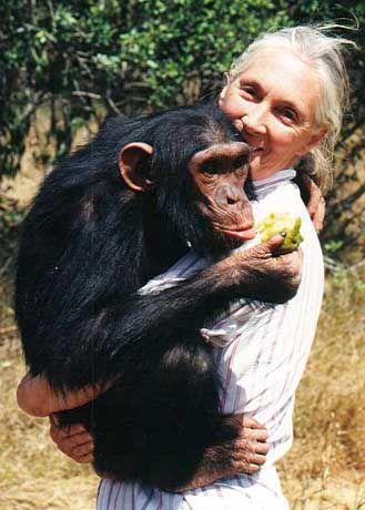 Ende der Neunziger in einer Auffangstation für verwaiste Schimpansen: Jane mit Uruhara