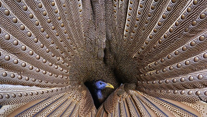 Vögel: Fest der Triebe