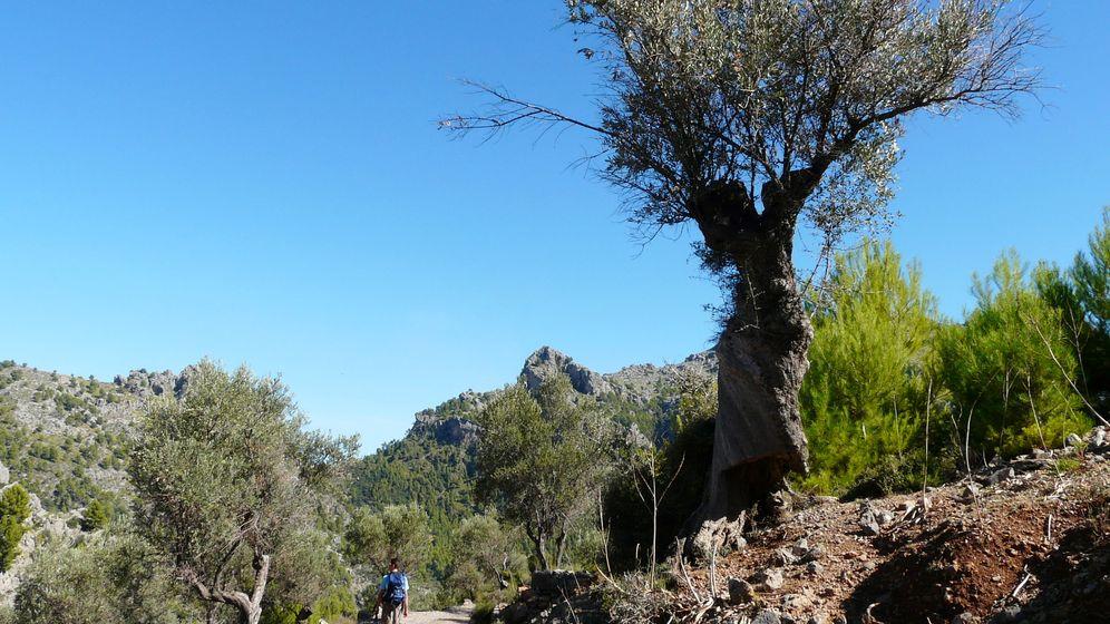 Mönchsgeier auf Mallorca: Wanderung zu den Raubvögeln