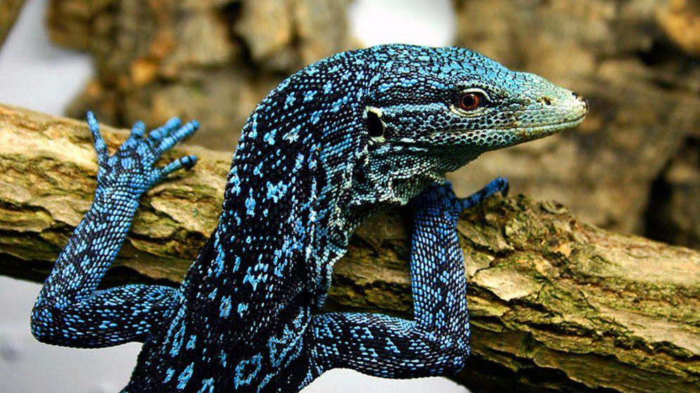 Artenvielfalt auf Neuguinea: Schatzkammer der Natur