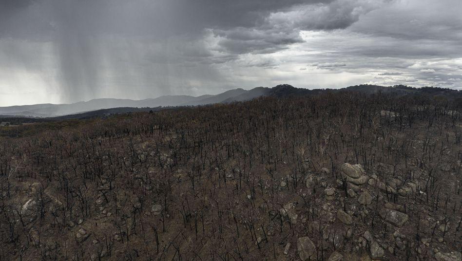 Regen nahe der Stadt Tamworth im australischen Bundesstaat New South Wales