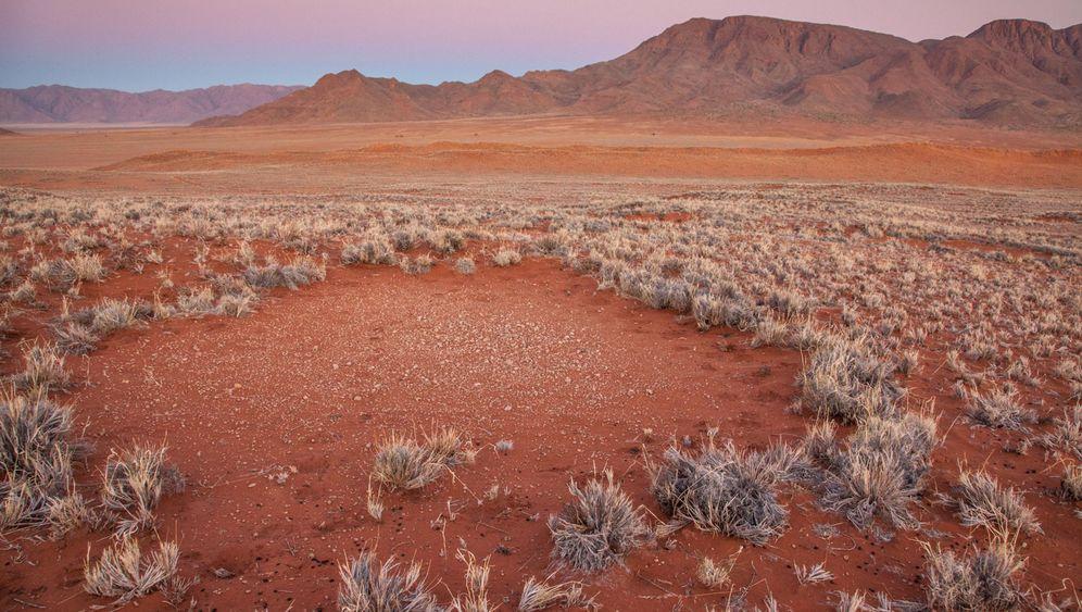 Naturphänomen: Mysteriöse Feenkreise