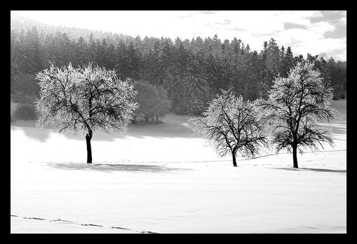 Bearbeitete Winterlandschaft: Der Schnee ist weiß, der Raureif hebt sich von den Ästen ab