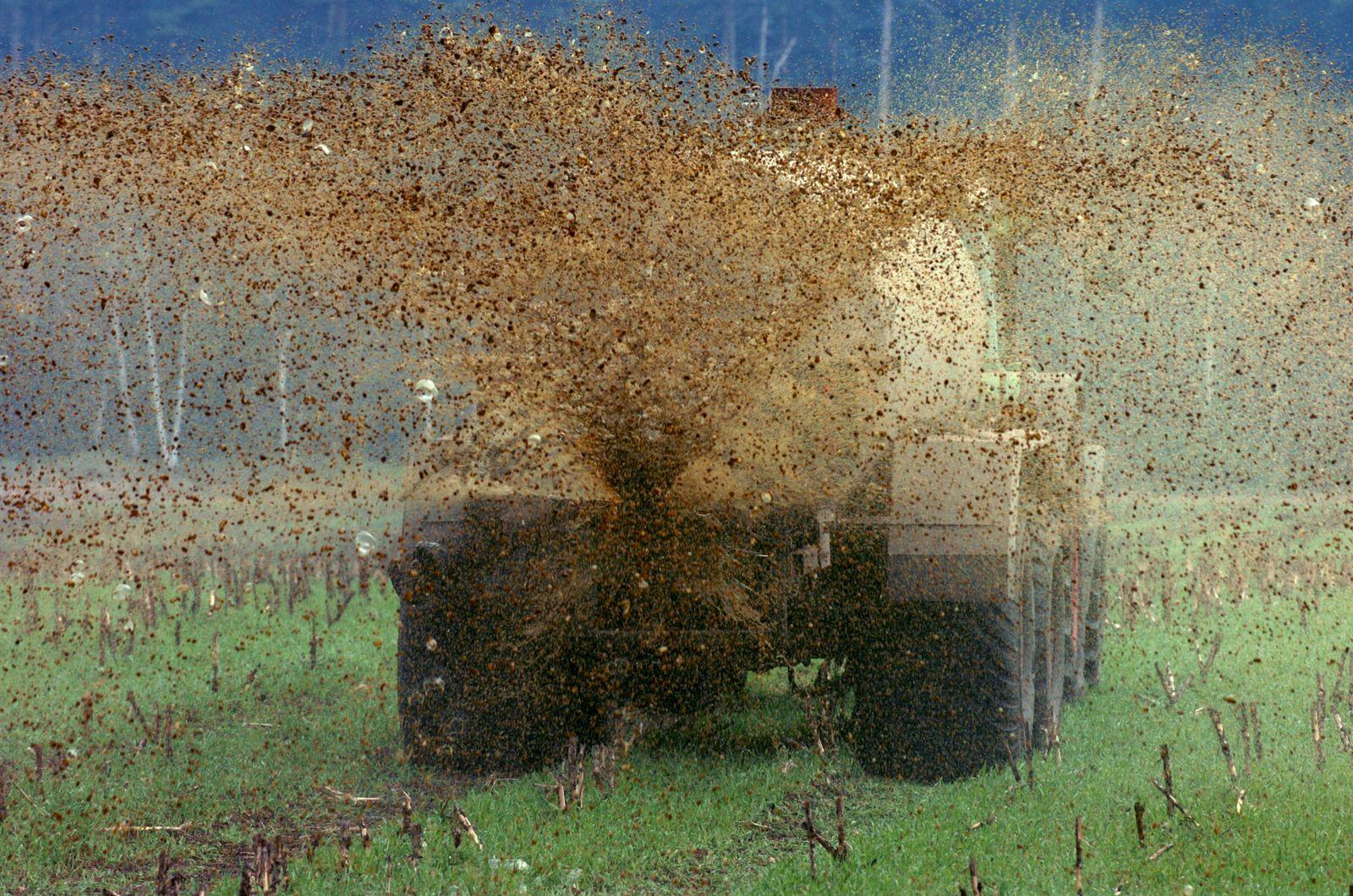 "Gülle-""Regen"" auf Maisfeld"