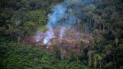 227 Umweltaktivisten wurden im Jahr 2020 ermordet – mehr als je zuvor