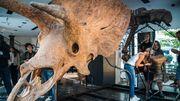 Sehr, sehr altes Dino-Puzzle zu verkaufen