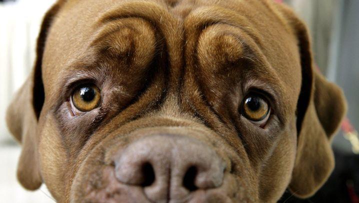 Fotostrecke: Hundeblick trifft Kindchenschema