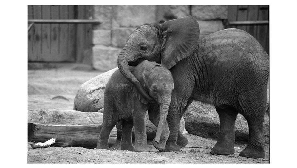 Elefanten in Berlin: Die Tragik der Dicken