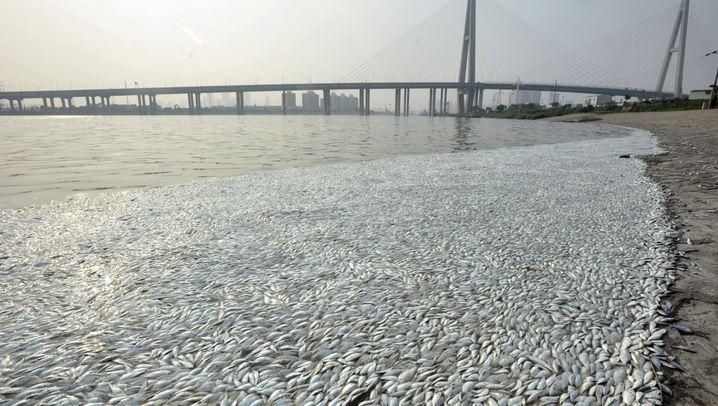 Tianjin: Tote Fische im Fluss