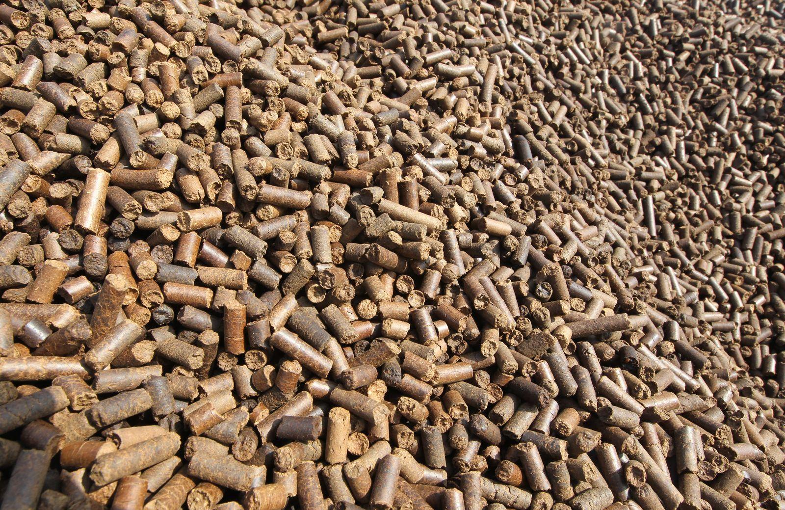 Holz statt Kohle - Energiekonzern startet Piloprojekt