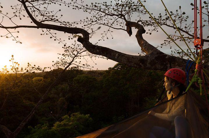 Eine Nacht im Baum