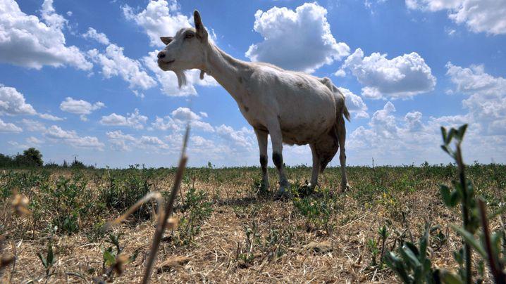 Invasive Arten: Wie man tierische Eindringlinge bekämpft