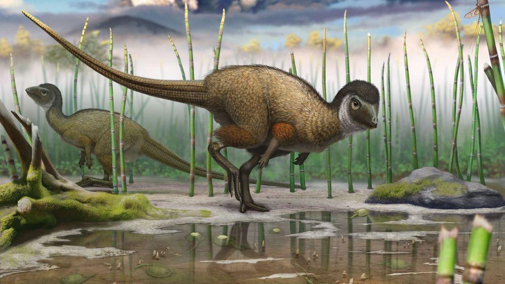Urzeit-Echsen: Dinosaurier mit Federkleid