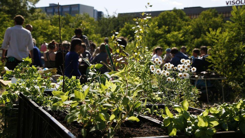 Urban Farming: Die Berliner Stadtbauern