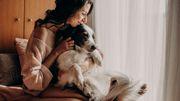 Menschen können ihre Hunde anstecken