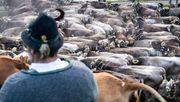 Haben wir zu viele Tiere im Land?
