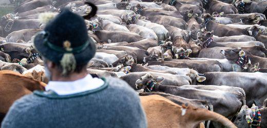 Landwirtschaft im Umbruch: »Wir haben zu viele Tiere im Land«